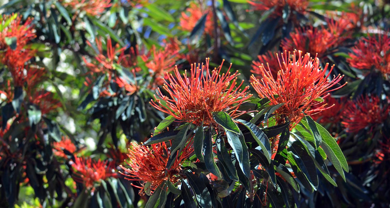 a guide to australian native plants flowers trees  u0026 grasses