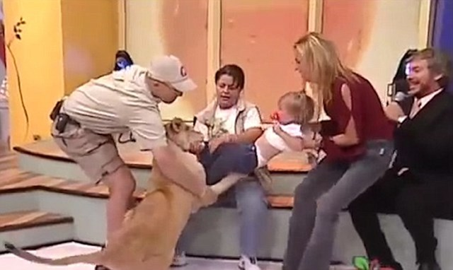 Toddler attacked by lion on live TV