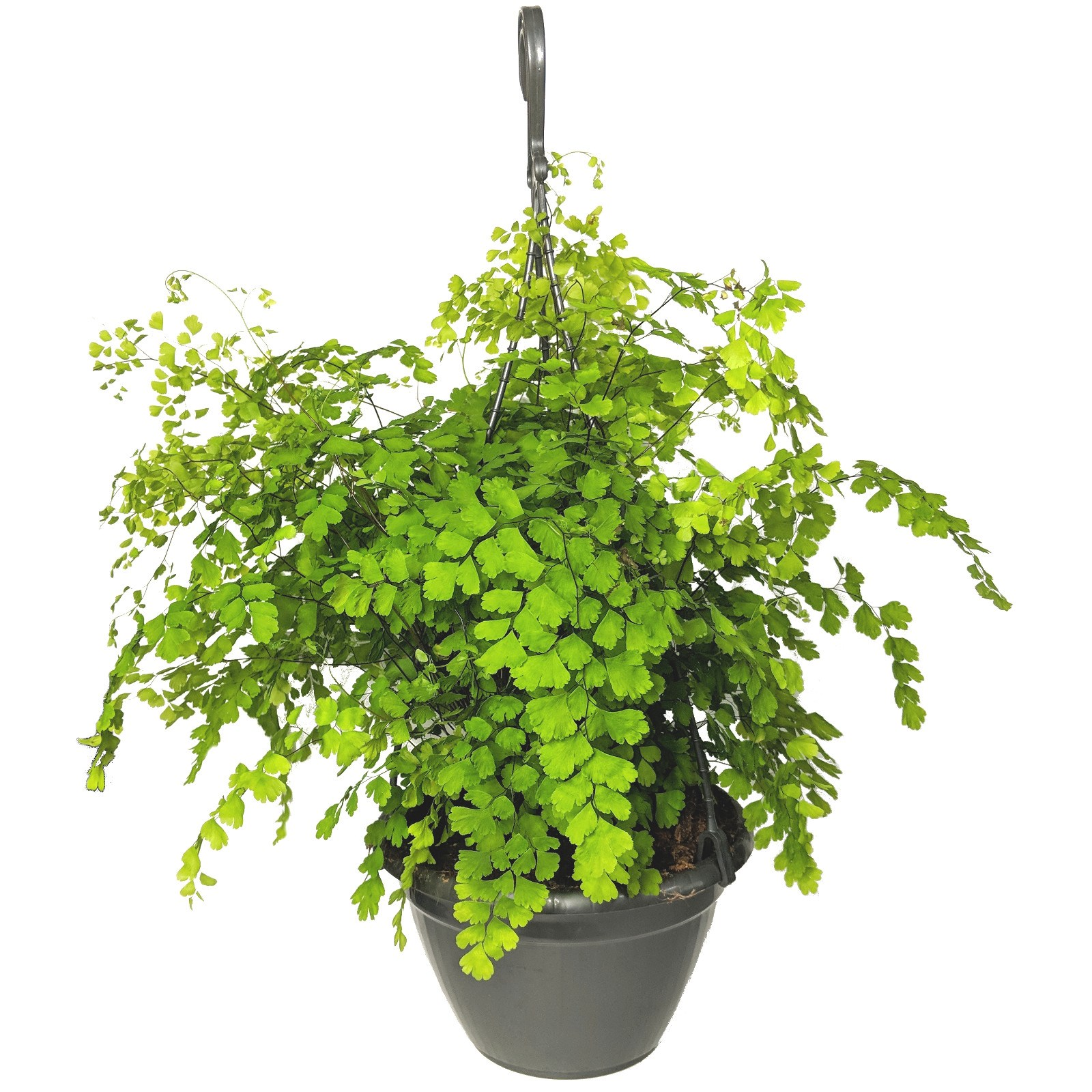 the best indoor hanging plants for the home