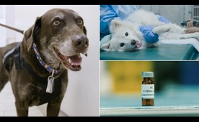 Cancer vaccine tested on dogs